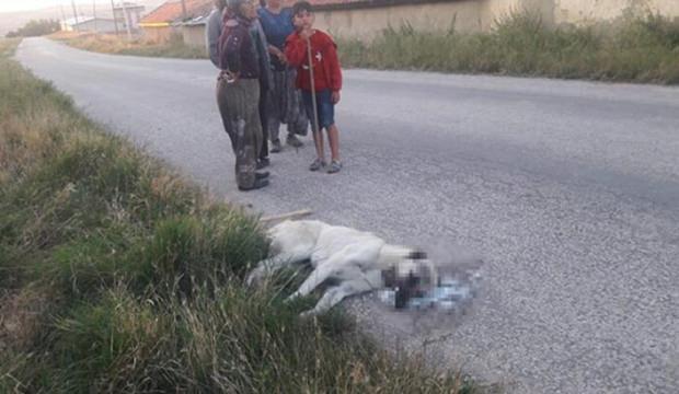 Vicdansızlık! 9 köpeği zehirleyerek öldürdüler