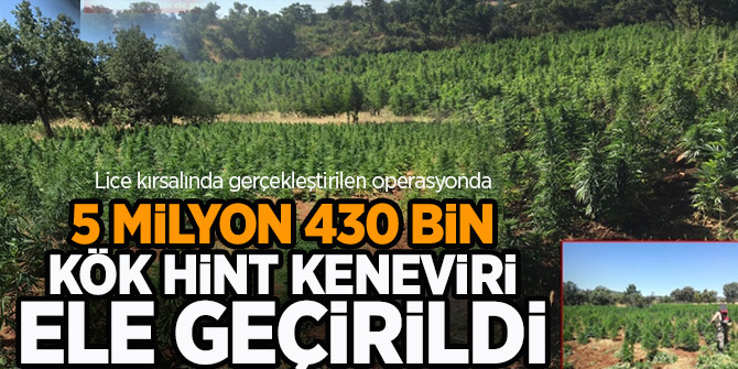 5 milyon 430 bin kök hint keneviri ele geçirildi