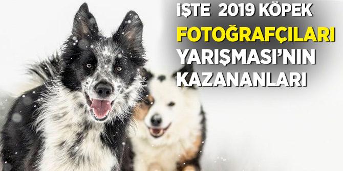 İşte  2019 Köpek Fotoğrafçıları Yarışması'nın kazananları