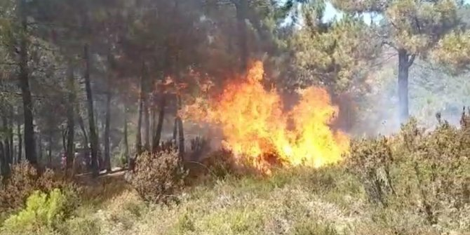 İstanbul Sultanbeyli'de orman yangını