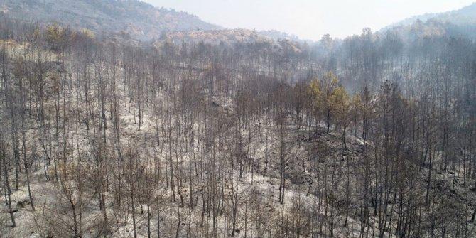 (Muğla'da orman yangını)  Bakan Pakdemirli'den son durum açıklaması