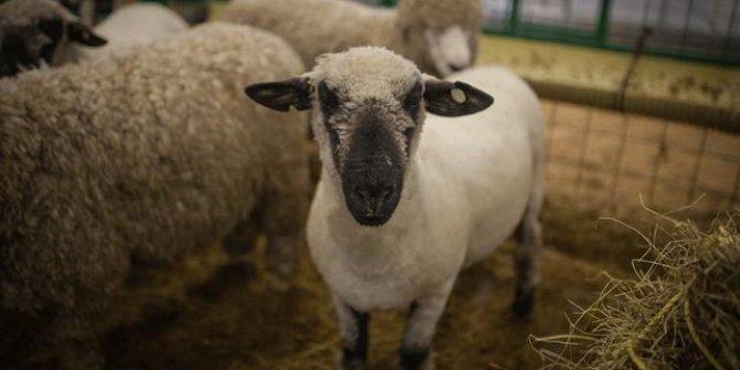 İzmir'de 20 mahalleye hayvan giriş çıkışı yasaklandı
