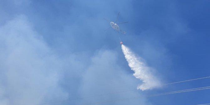 Burgazada'da ormanlık alanda yangın