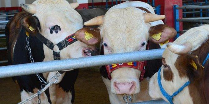 Et ve Süt Kurumu elde kalan kurbanlıkları satın alacak