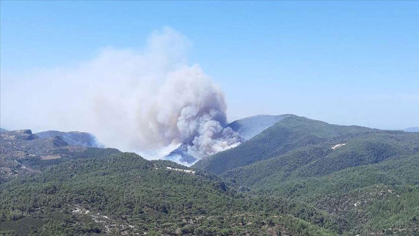 Muğla'da orman yangını! Havadan ve karadan müdahale ediliyor
