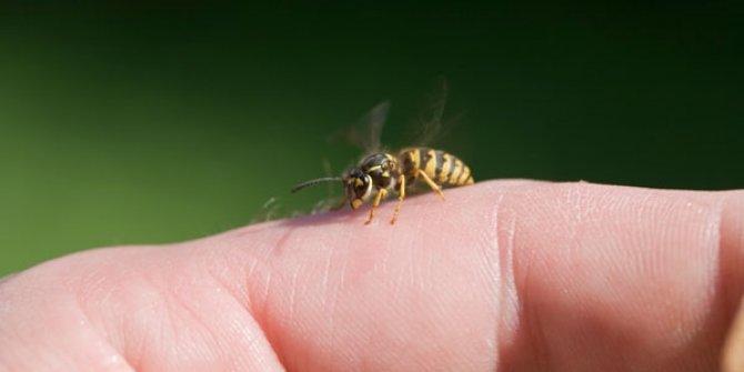 Eşek arısının soktu! Hayatını kaybetti