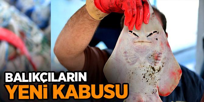 Yeni kabusu: İnsan yüzlü sapan balığı