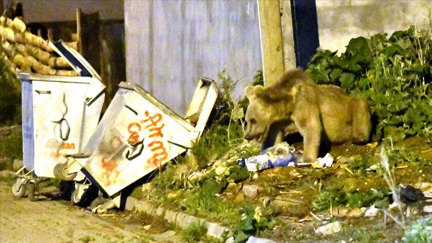 Kars'ta acıkan bozayı mahalleye inerek yiyecek aradı