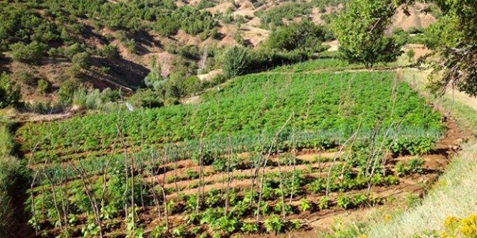 Bingöl'de uyuşturucu tarlalarına operasyon
