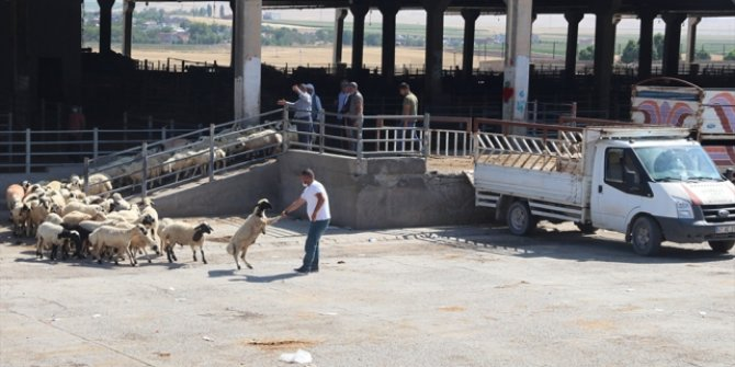 Diyarbakır Canlı Hayvan Borsası yeniden hizmete açıldı