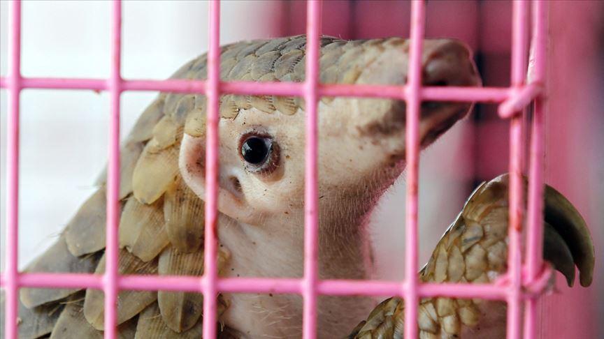 Bulaşıcı hastalıkların yüzde 75'i hayvanlardan insanlara geçen hastalıklardan oluşuyor