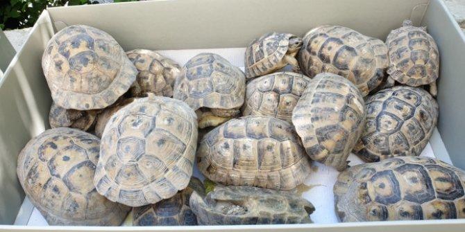 Bahçede mahsur kalan 50 kaplumbağa ölmek üzereyken kurtarıldı