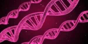 DNA nanorobotları kanser tedavisinde başarılı oldu
