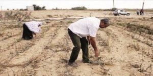 İsrail Filistin topraklarını zehirliyor