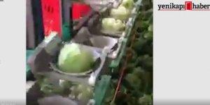 Rusya'da akıl almaz 'lahana' sistemi!