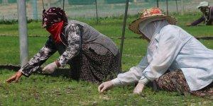 Fidanlara kadın eli