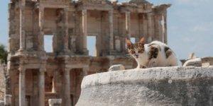 Antik kent onlara ev sahipliği yapıyor!