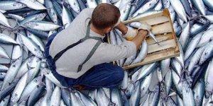 Balık fiyatları düşüyor...