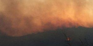 İzmir'in Torbalı ilçesinde makilik alanda yangın çıktı.