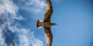 İngiltere'de bilim insanları duyurdu! Dünyanın en büyük kuşu keşfedildi