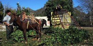 Bakan Pakdemirli açıkladı:Orman köylüsüne 2,1 milyar liralık destek
