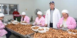Kuru incir Hindistan pazarına düğünlerle girdi