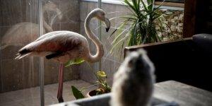 Yaralı flamingoya ve yavru baykuşa evini açtı
