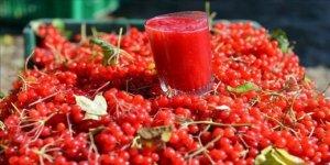 Gilaburu meyvesi nedir? Gilaburunun faydaları nelerdir?