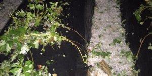 Manisa'da dolu tarım arazilerine zarar verdi