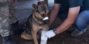 Resulayn'da Mehmetçik'ten yaralı köpeğe yardım