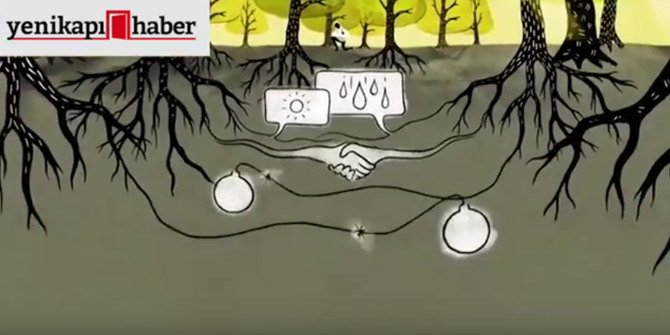 Ağaçlar bakın birbirleriyle nasıl iletişim kuruyorlar?