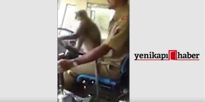 Direksiyonu ''Maymuna'' bırakan şoför işinden oldu