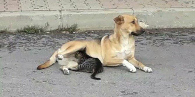 Yavru kediye anne şefkati!