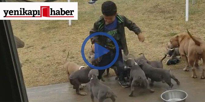Minik çocuk bir anda köpeklerin ortasında kaldı!