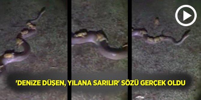 """""""Denize düşen 'yılana' sarılır"""" sözü gerçek oldu"""""""