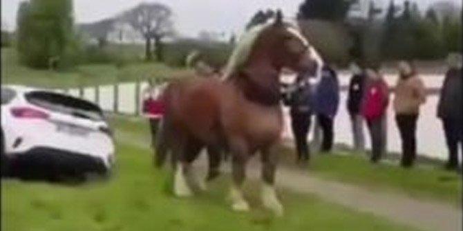 Atın inanılmaz gücü!