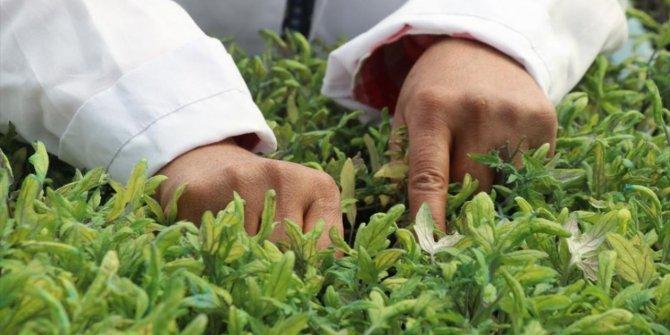 Kovid-19 sürecinde üreticiler yerli tohuma yöneldi